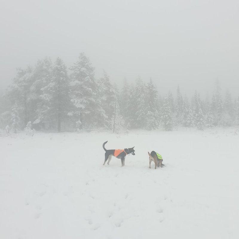 Snøen har kommet og ventelister for løpene opprettet